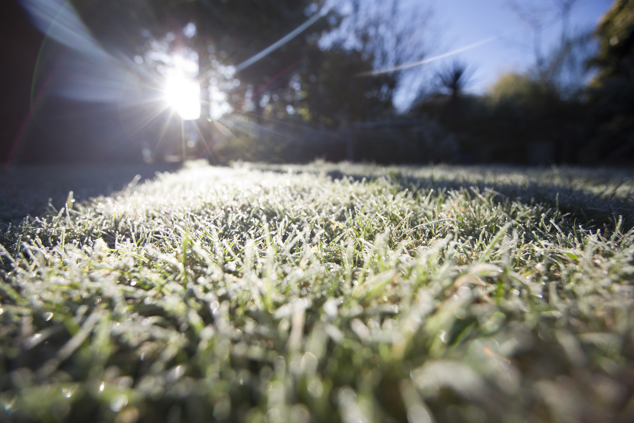 Pittsburgh Lawn During Winter