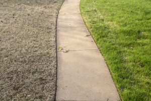 Lawn with Dry Grass